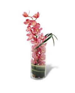 Peaceful Pink Orchid